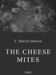 The Cheese Mites